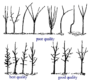 goodqualitytree2.JPG:
