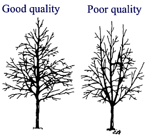 goodqualitytree3.JPG:
